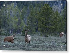 Watchful Acrylic Print by Charles Warren