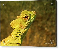 Watchful Eye Of The Green Basilisk Lizard  Acrylic Print by Inspired Nature Photography Fine Art Photography