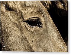 Watchful Eyes Acrylic Print