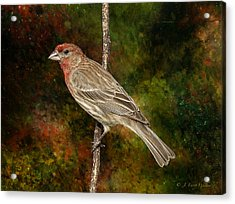 Acrylic Print featuring the digital art Watchful House Finch by J Larry Walker