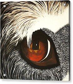 Watchful Acrylic Print by Lisbet Damgaard