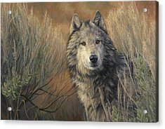 Watchful Acrylic Print by Lucie Bilodeau