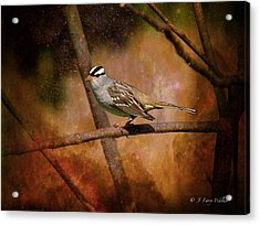 Watchful White-crowned Sparrow Acrylic Print