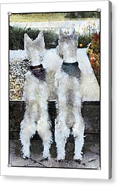 Watching And Waiting 2 Acrylic Print