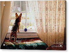 Watching For His Master Acrylic Print