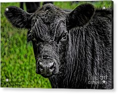 Watching Me Acrylic Print