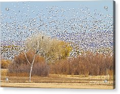 Acrylic Print featuring the photograph Watching Over The Flock by Bryan Keil