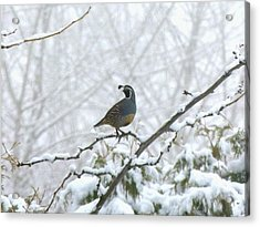 Watching Over The Flock Acrylic Print