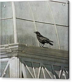 Watching Acrylic Print by Sally Banfill