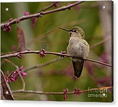 Watching Spring Arrive Acrylic Print