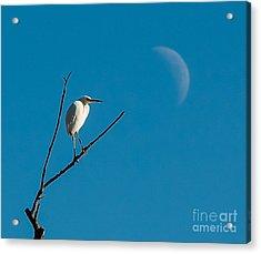 Watching The Moon Acrylic Print