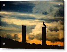 Watching The Sunrise Acrylic Print by Karol Livote