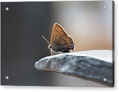 Acrylic Print featuring the photograph Watching The World  by Jeanne May