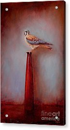 Watchtower - American Kestrel  Acrylic Print by Lori  McNee