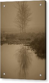 Water Buffalo Morning Fog Acrylic Print by Frank Feliciano