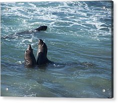 Acrylic Print featuring the photograph Water Chorus by Christine Drake