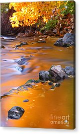 Water Color Gold Acrylic Print