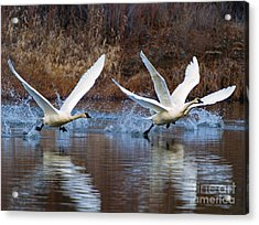 Water Dance Acrylic Print by Mike  Dawson