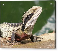 Acrylic Print featuring the photograph Water Dragon Profile by David Rich