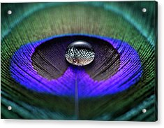 Water Drop On Peacock Feather Acrylic Print by Miragec