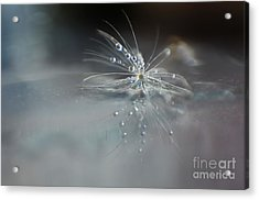 Water Drops Acrylic Print by Eden Baed
