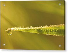 Water Drops On A Leaf Acrylic Print by Peggy Collins