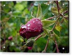 Rain Drops On Rose Acrylic Print