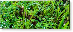 Water Drops On The  Grass 0052 Acrylic Print by Terrence Downing