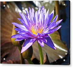 Acrylic Print featuring the photograph Water Flower 1004d by Marty Koch