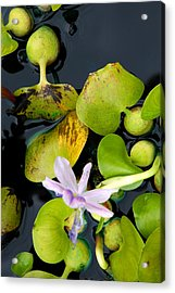 Acrylic Print featuring the photograph Water Flower by Allen Carroll
