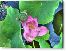 Water Flower Acrylic Print