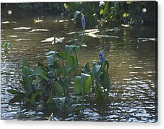 Water Flower Acrylic Print by Ralph Jones