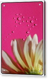 Water Flowers Acrylic Print by Kip Krause