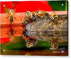 Water For Honey Bees 2 Acrylic Print