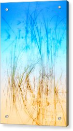 Water Grass - Outer Banks Acrylic Print by Dan Carmichael