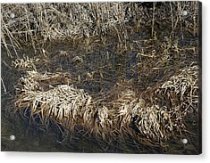Dried Grass In The Water Acrylic Print