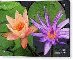 Water Lilies 011 Acrylic Print