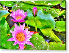 Water Lilies 2 Acrylic Print by Richard Zentner
