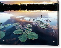 Water Lilies And Cloud Reflections Acrylic Print