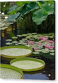 Acrylic Print featuring the photograph Water Lilies And Platters And Lotus Leaves by Byron Varvarigos