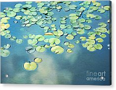 Water Lilies Acrylic Print by Darren Fisher