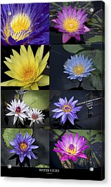 Water Lilies Acrylic Print by Phil Abrams