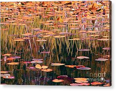 Water Lilies Re Do Acrylic Print by Chris Anderson