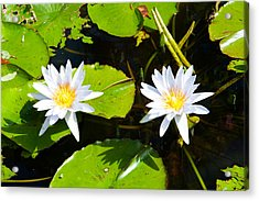 Water Lilies With Lily Pads In A Pond Acrylic Print by Panoramic Images