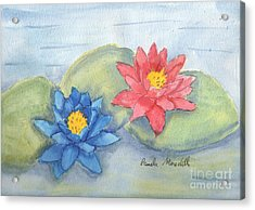 Water   Lillies  Acrylic Print by Pamela  Meredith