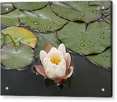 Acrylic Print featuring the photograph Water Lilly by Haleh Mahbod