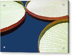 Water Lilly Platters Acrylic Print by Joseph J Stevens