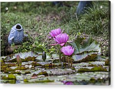 Water Lilly Trio Acrylic Print