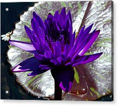 Water Lily 008 Acrylic Print