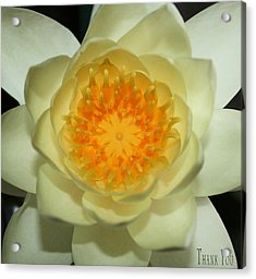 Water Lily 1  And A Reminder To Utter The Words Thank You.  Acrylic Print